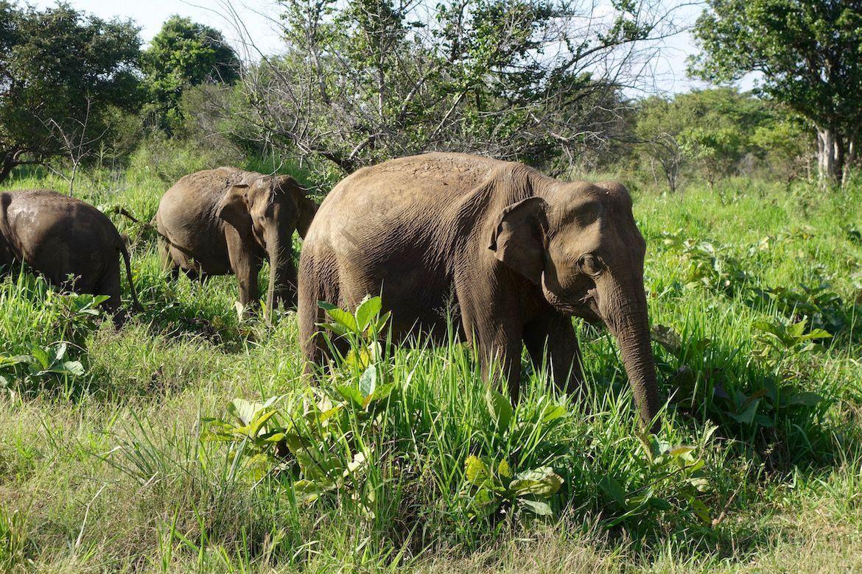 Safari de Elefantes en Libertad en Eco Park