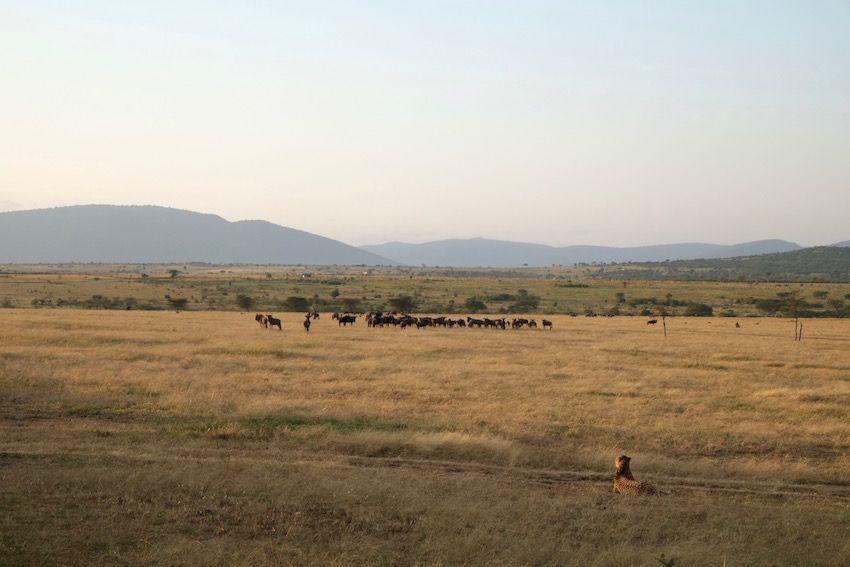 safari kenia