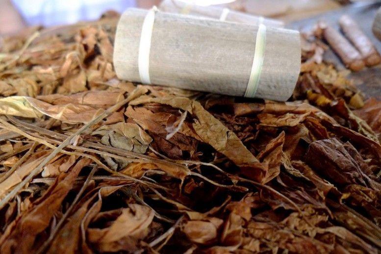 Hojas de tabaco secas, primera parte del proceso de fabricación del tabaco