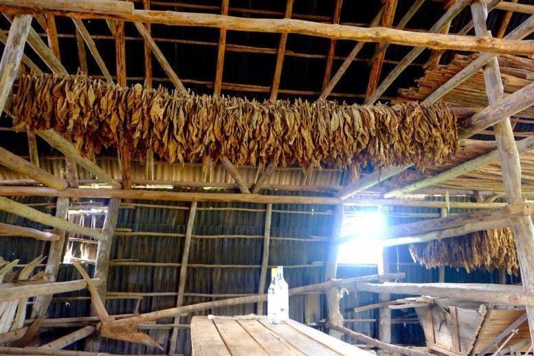 Secadero de hojas de tabaco